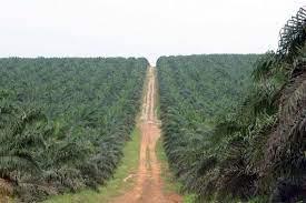 Centrafrique : Avis à manifestation d'intérêt relatif au processus de privatisation de la CENTRAPALM